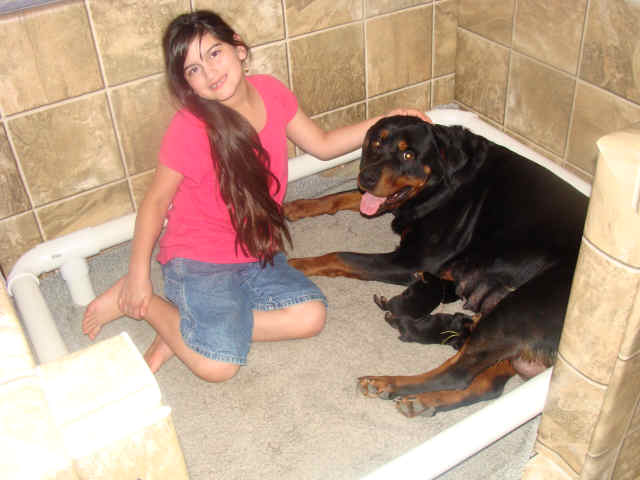 woman sex rottweiler with