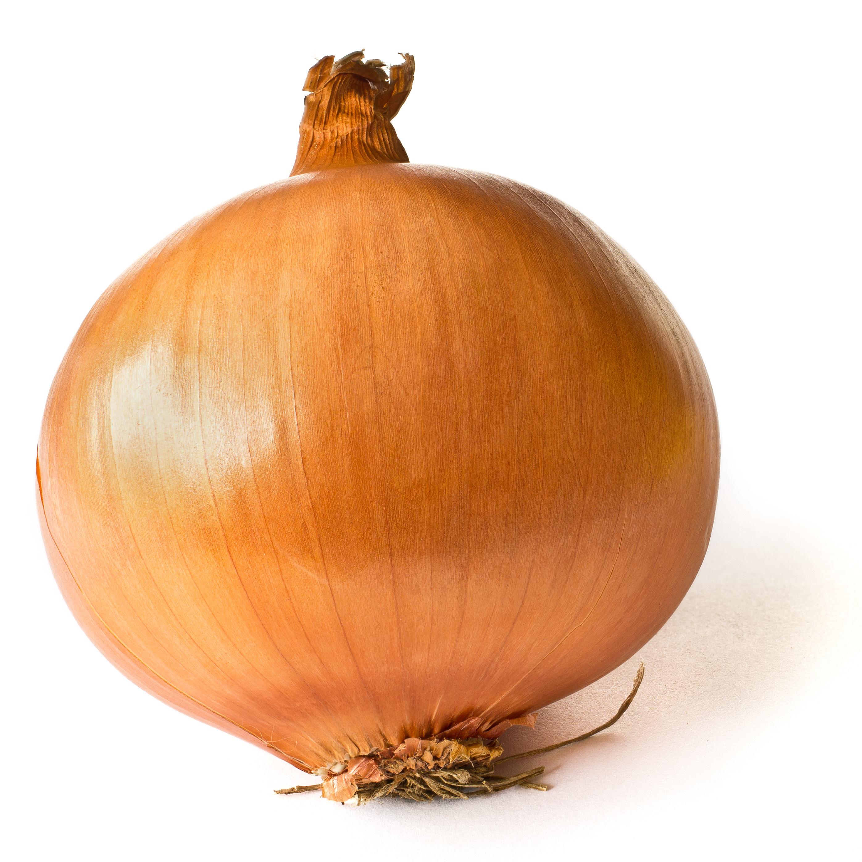 hidden onionib porn wiki tor